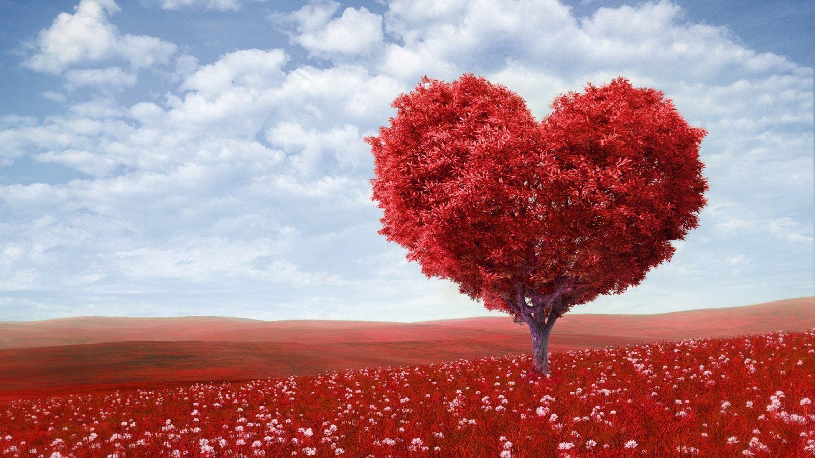 jardin-de-amor